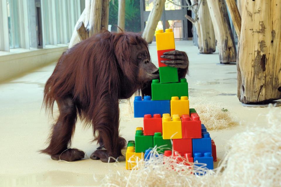 Символи-2016: найвідоміші та найприкольніші мавпи у світі - фото 7