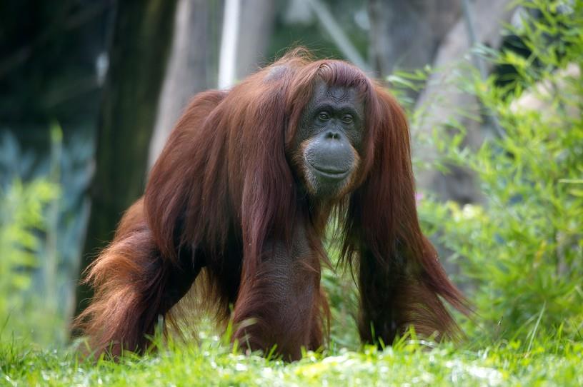 Символи-2016: найвідоміші та найприкольніші мавпи у світі - фото 6