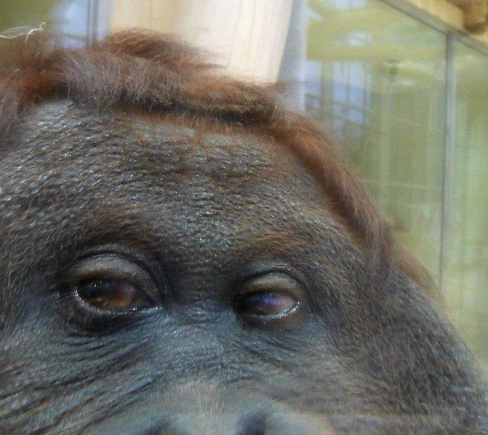 Символи-2016: найвідоміші та найприкольніші мавпи у світі - фото 5