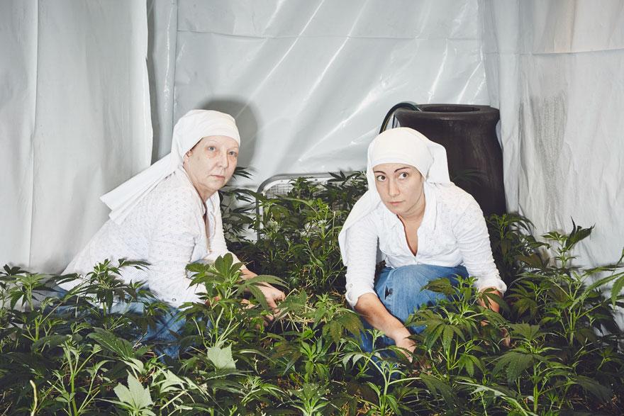 Як американські монахині вирощують марихуану - фото 1