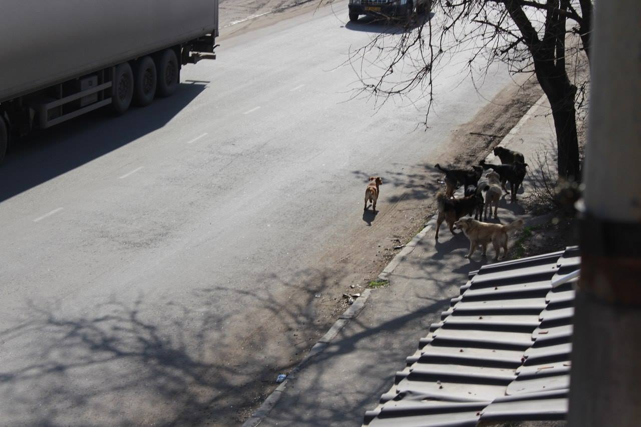 Чому Миколаїв перетворився на рай для диких собак та пекло для людей - фото 6