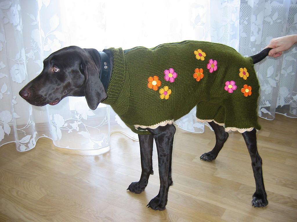 Холод собачий: ТОП-20 собак у зимовому одязі - фото 15
