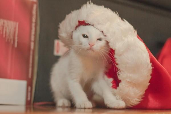 ТОП-20 фото, які створять вам новорічний настрій - фото 15