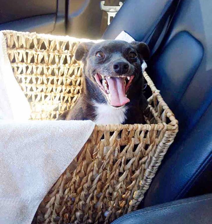 Щастя старих собак, яких взяли з вулиці - фото 3