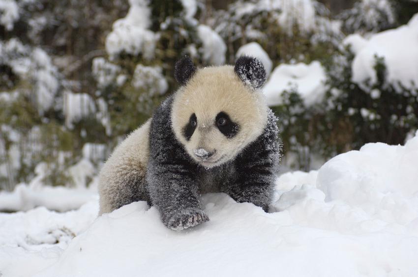 Як тварини радіють снігу - фото 4