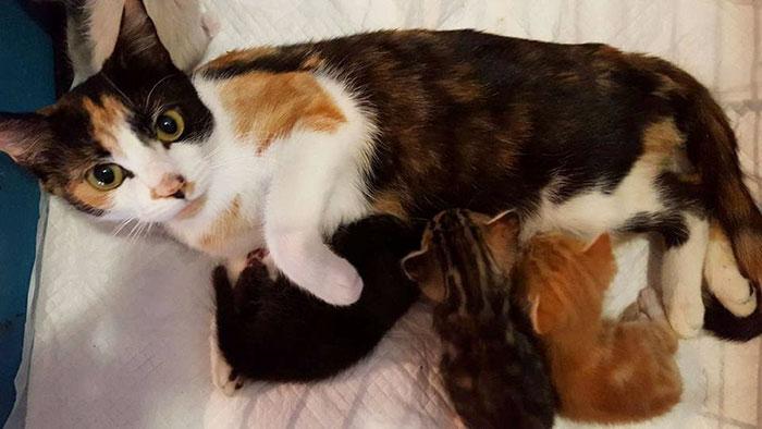 Паралізована кішка повзла до своїх кошенят попри жахливу травму - фото 1