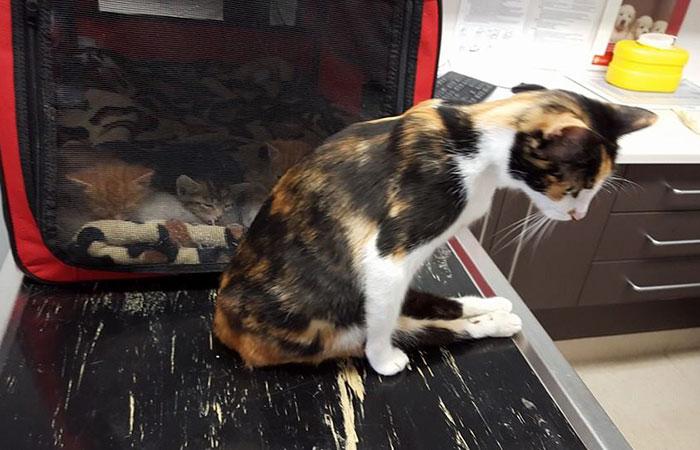 Паралізована кішка повзла до своїх кошенят попри жахливу травму - фото 2