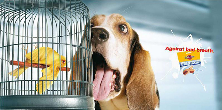 Може, пора переводити собаку на Pedigree Light? - фото 26