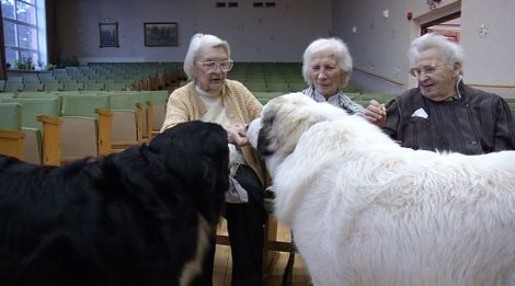У Латвії пенсіонерів лікують величезні собаки  - фото 1
