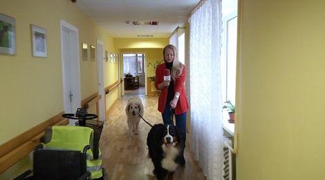 У Латвії пенсіонерів лікують величезні собаки  - фото 2