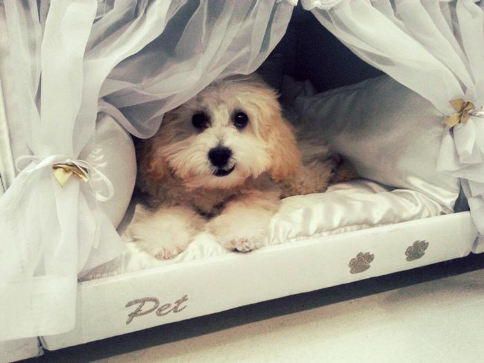 Бразильці придумали ліжко з собачою будкою - фото 1