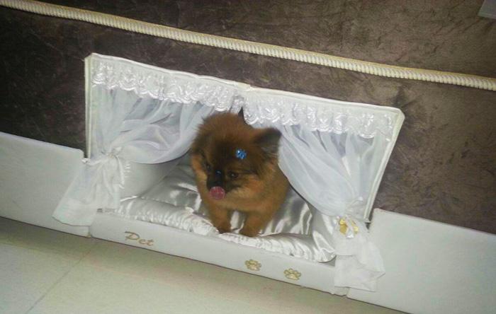 Бразильці придумали ліжко з собачою будкою - фото 2
