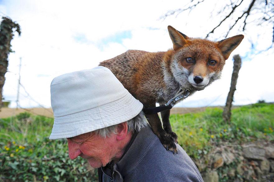 Як чоловік врятував лисиць, а вони сіли йому на голову  - фото 2