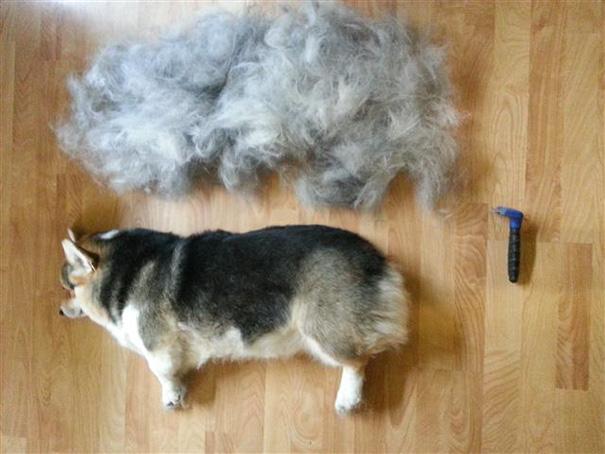 Собака Очень Линяет И Похудела. Почему собака худеет