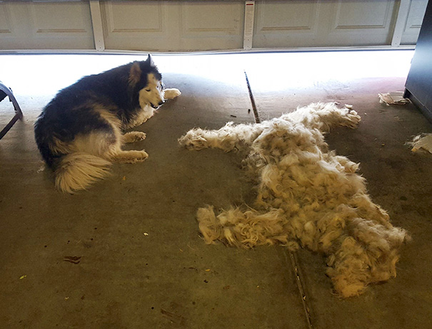 Збери собаку: як виглядає головна ознака того, що у вас є пес або кіт - фото 8