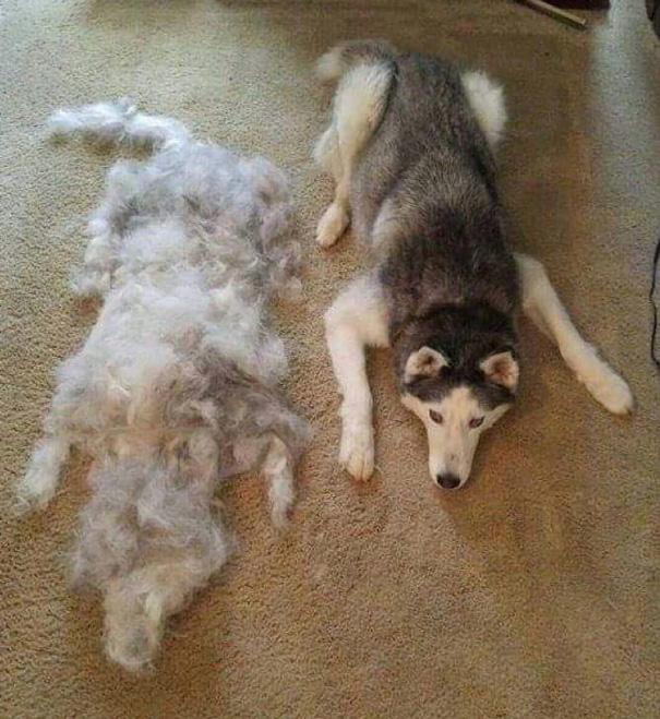 Збери собаку: як виглядає головна ознака того, що у вас є пес або кіт - фото 7