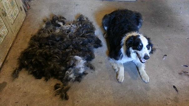 Збери собаку: як виглядає головна ознака того, що у вас є пес або кіт - фото 3