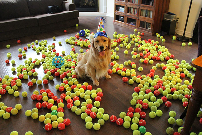 ТОП-13 тварин-іменинників, які святкують день народження веселіше за тебе - фото 1