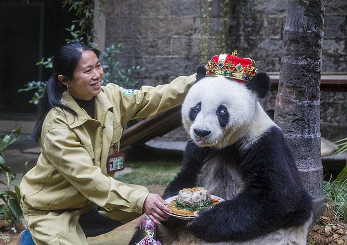 ТОП-13 тварин-іменинників, які святкують день народження веселіше за тебе - фото 2