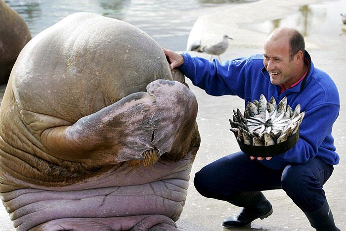 ТОП-13 тварин-іменинників, які святкують день народження веселіше за тебе - фото 3