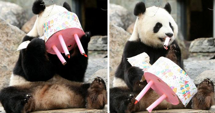 ТОП-13 тварин-іменинників, які святкують день народження веселіше за тебе - фото 4