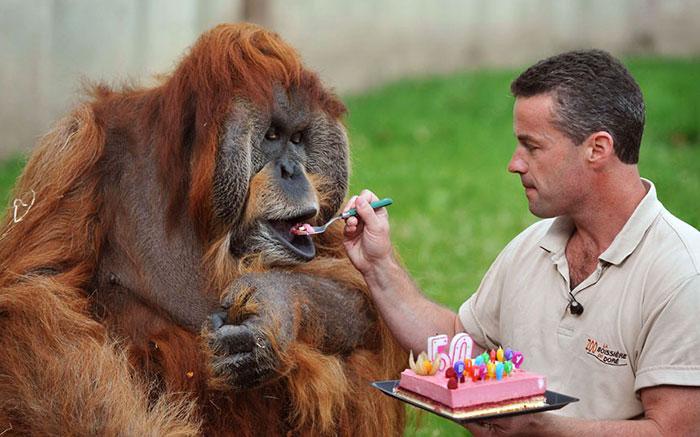 ТОП-13 тварин-іменинників, які святкують день народження веселіше за тебе - фото 5