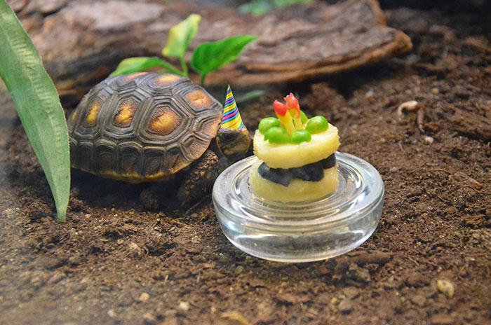 ТОП-13 тварин-іменинників, які святкують день народження веселіше за тебе - фото 7