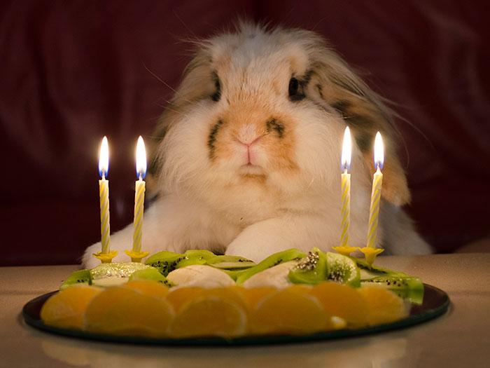 ТОП-13 тварин-іменинників, які святкують день народження веселіше за тебе - фото 9