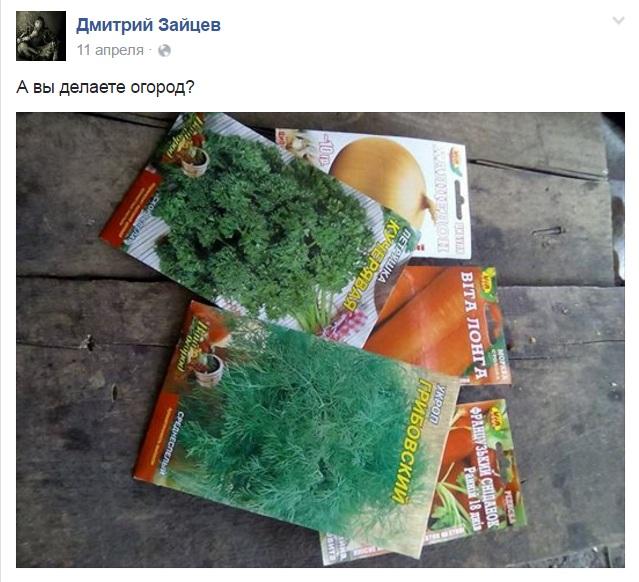 """Як """"колоради"""" знищують картоплю бійців АТО - фото 5"""