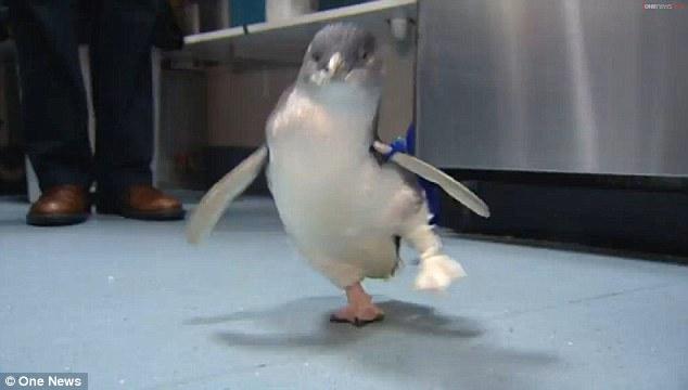 Пінгвін з протезом знову радіє життю - фото 1