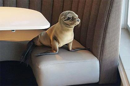 У США зголоднілий морський лев зайняв столик в рибному ресторані - фото 1