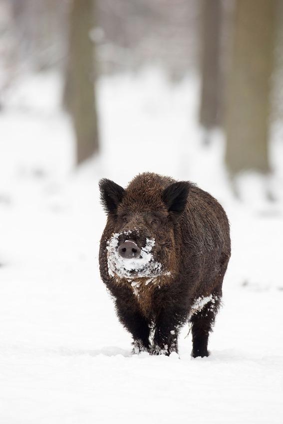 Як тварини радіють снігу - фото 3