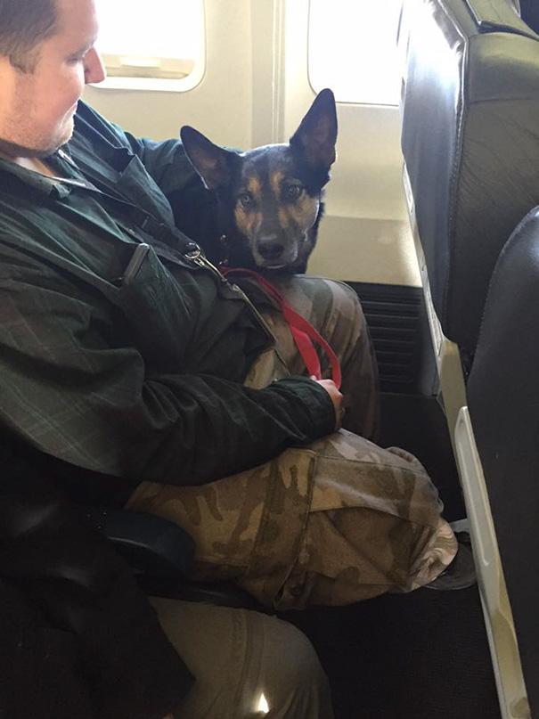 У Канаді авіакомпанії порушили свої правила, щоб врятувати сотні тварин від пожеж  - фото 7