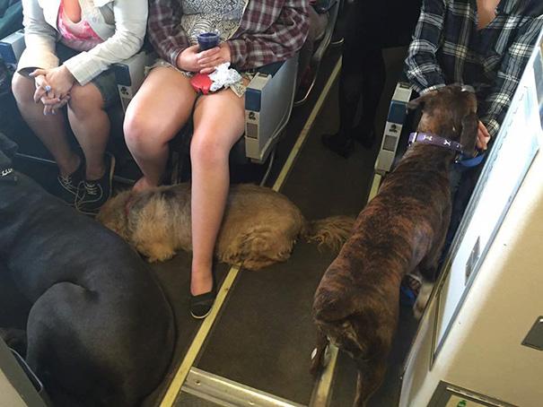 У Канаді авіакомпанії порушили свої правила, щоб врятувати сотні тварин від пожеж  - фото 2