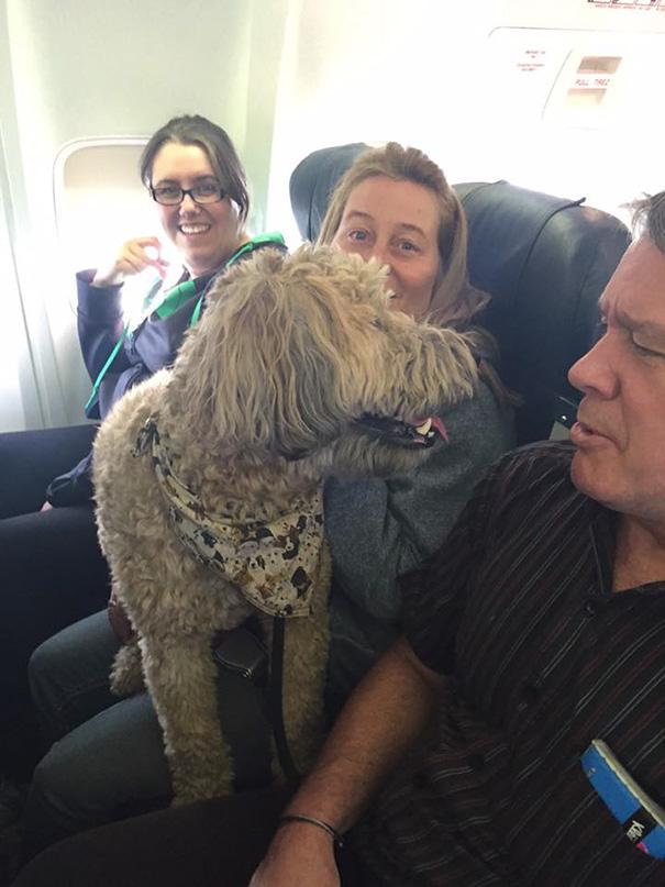 У Канаді авіакомпанії порушили свої правила, щоб врятувати сотні тварин від пожеж  - фото 1