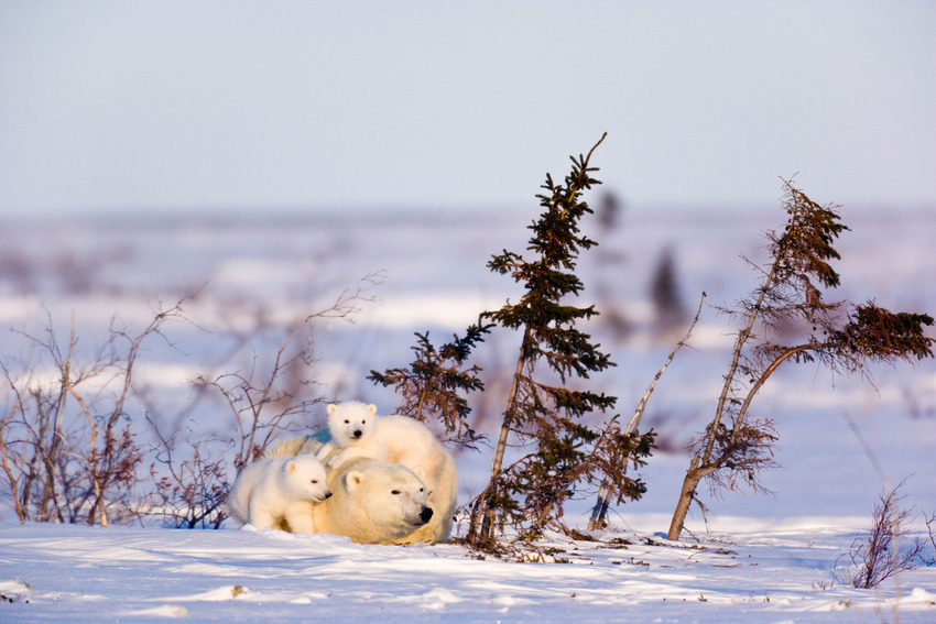 Як тварини радіють снігу - фото 2