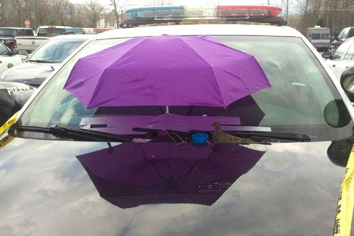 Як голуби звили гніздо на авто американських копів - фото 2