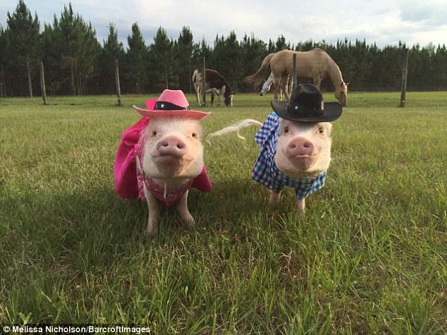 Як гламурні свинки фанів завойовували - фото 4
