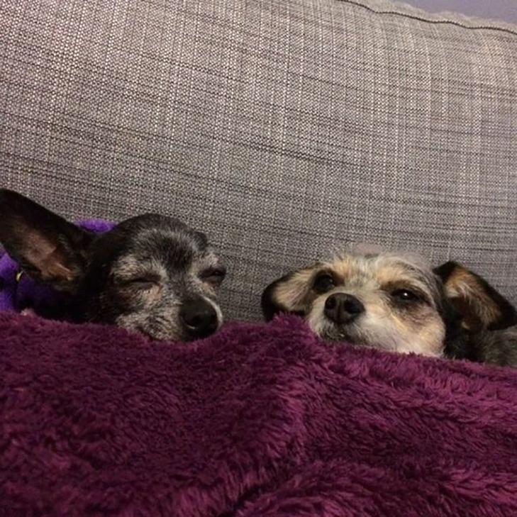 Щастя старих собак, яких взяли з вулиці - фото 20