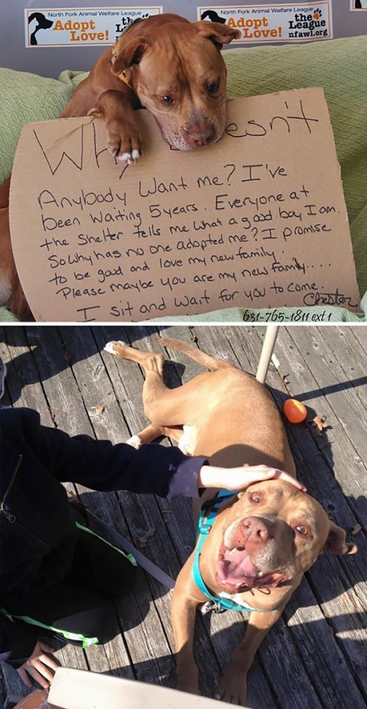 Щастя старих собак, яких взяли з вулиці - фото 19