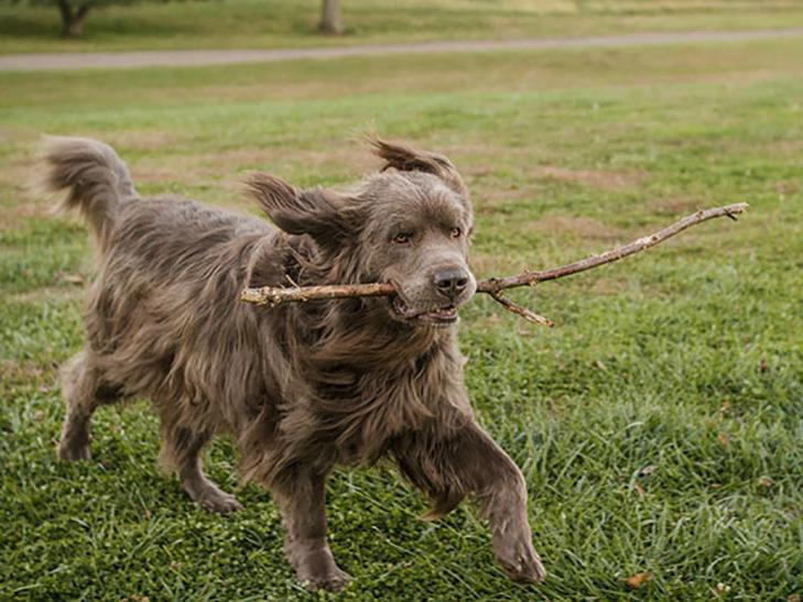 Щастя старих собак, яких взяли з вулиці - фото 5