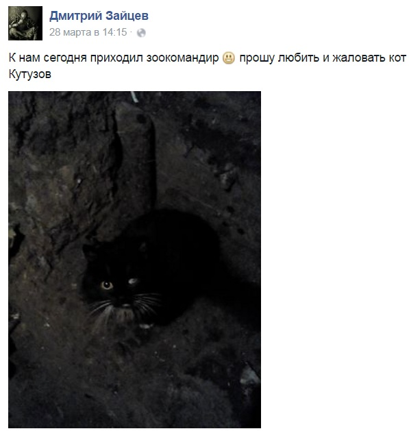 За що котам в АТО треба поставити пам'ятник-5 - фото 15