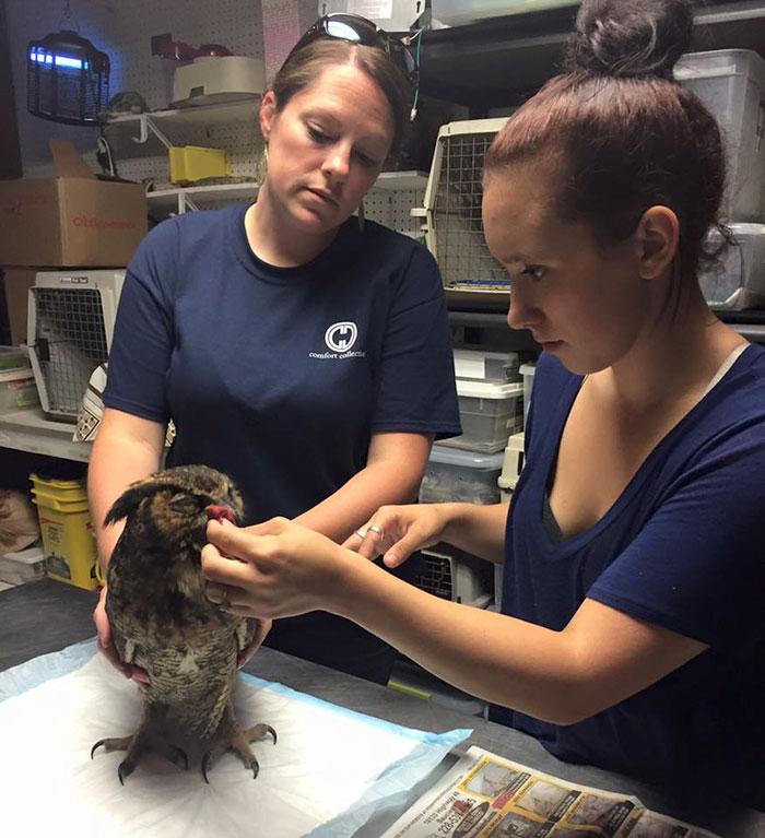 Як сова зворушливо обіймати свого рятівника - фото 4