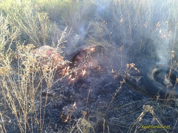 АЧС Шириться Миколаївщиною: на Баштанщині знайшли труп свині з підозрою на чуму - фото 3