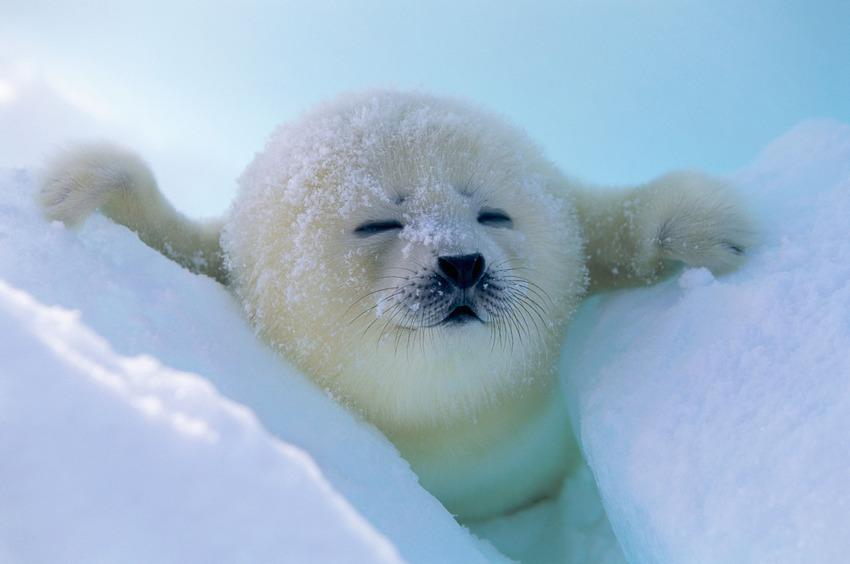 Як тварини радіють снігу - фото 1