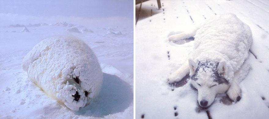 ТОП-5 кумедних тюленів, які надзвичайно схожі на собак - фото 2