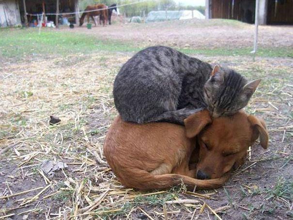 ТОП-13 кумедних котиків, які можуть спати будь-де і будь-коли - фото 7