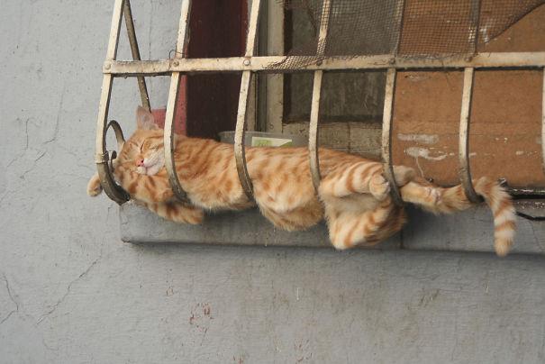 ТОП-13 кумедних котиків, які можуть спати будь-де і будь-коли - фото 9