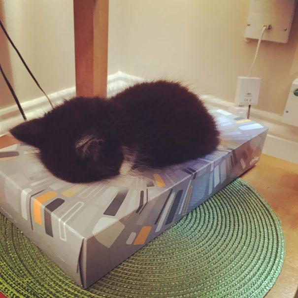 ТОП-13 кумедних котиків, які можуть спати будь-де і будь-коли - фото 12