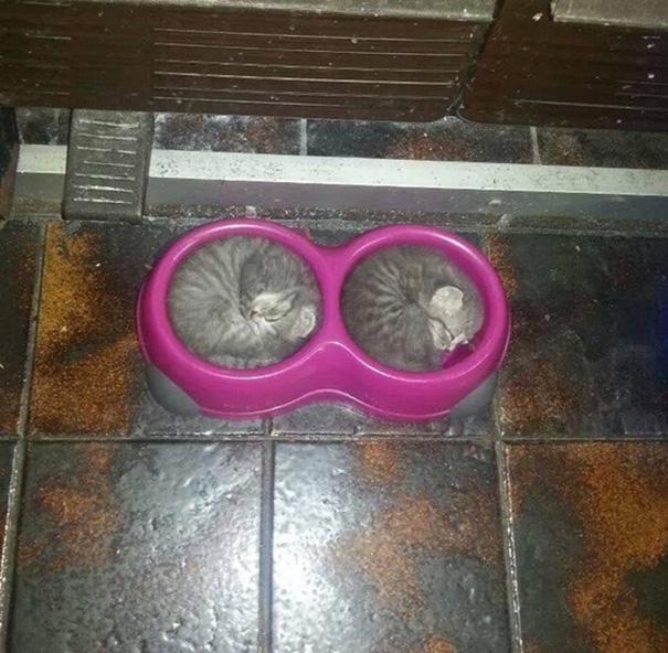 ТОП-13 кумедних котиків, які можуть спати будь-де і будь-коли - фото 13